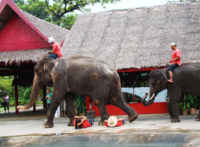 Show de elefantes