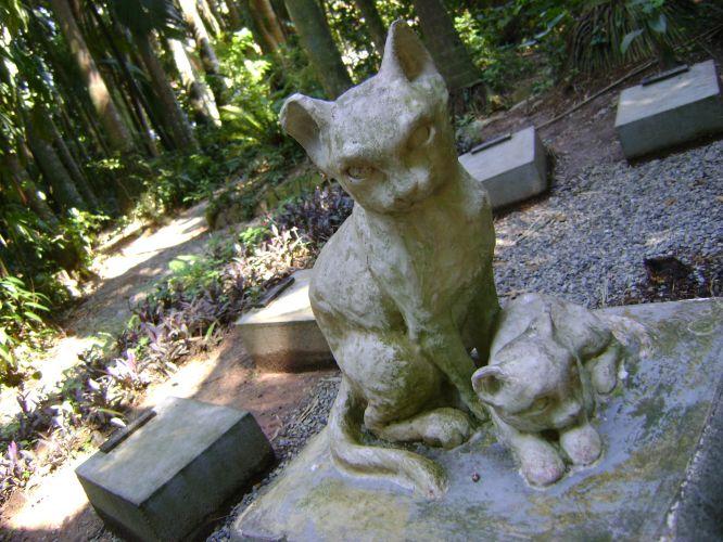 Cemitério dos Gatos