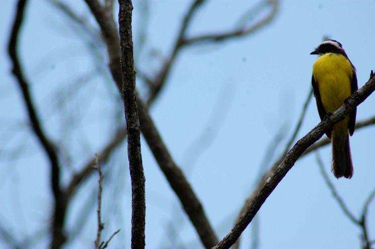 Pássaro em paz
