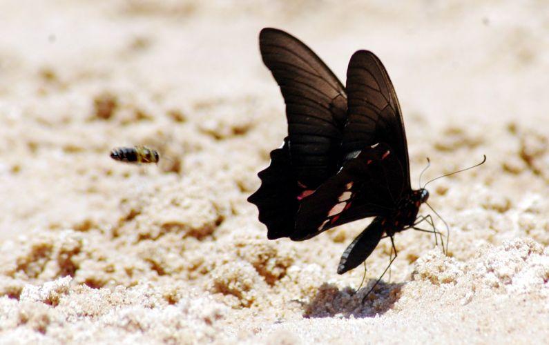 Belos insetos