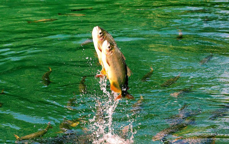 Mais peixes