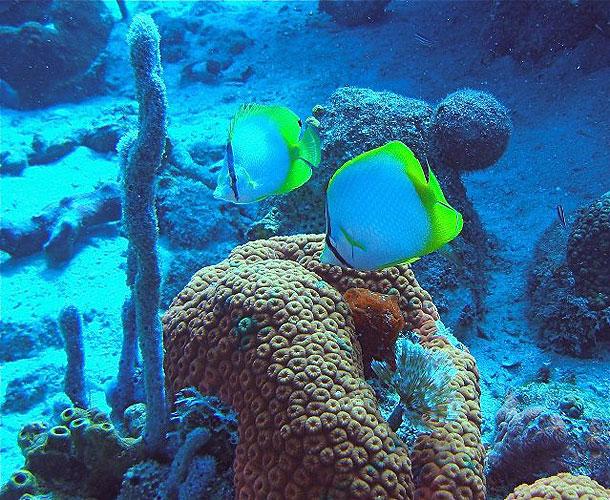 Parque Los Corales