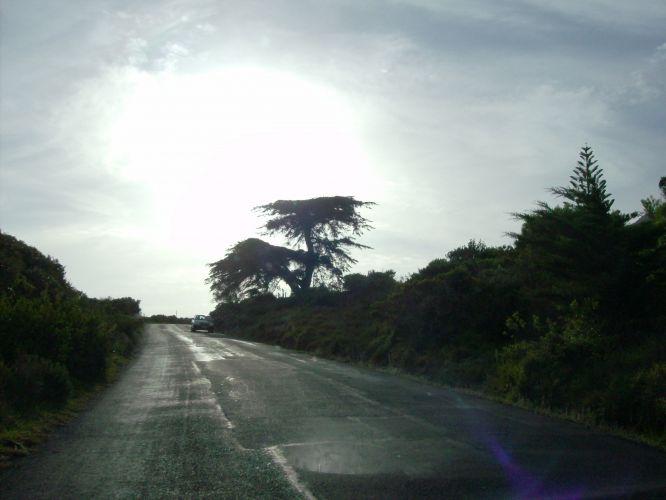 Árvore africana