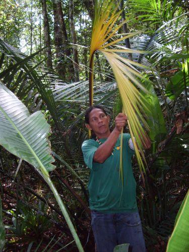 Trilha ecológica em Manaus
