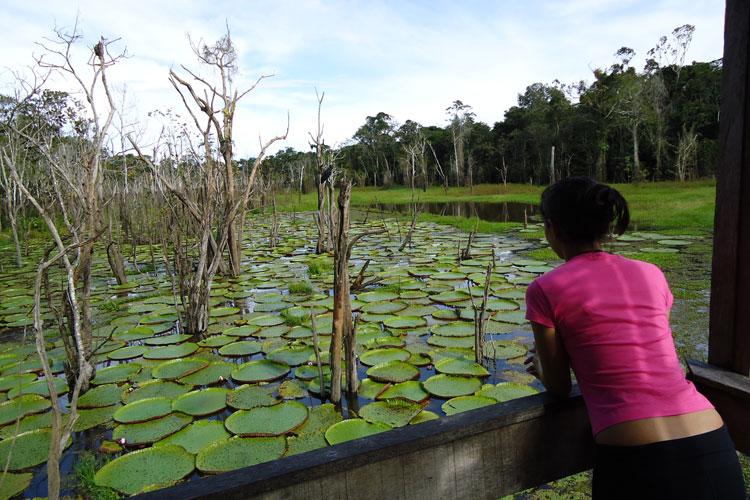 Amazônia (AM)