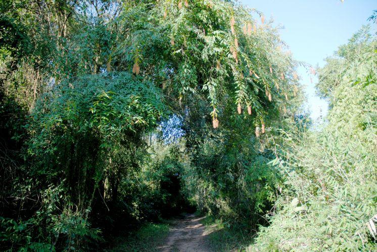 Parque Estadual de Vassununga