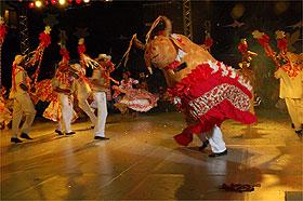 Bumba-meu-boi dança em apresentação de siriri em festival de Cuiabá