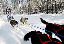 Passeio de trenó de huskies a 40 minutos de Mont Tremblant