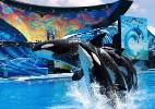 SeaWorld desmente fim de shows com orcas, mas acabará com acrobacias - Divulgação/SeaWorld